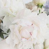 Peonies for me please! In this time of uncertainty, we still have beauty... . . Thanks @artiesestudios for this beautiful picture #peonies